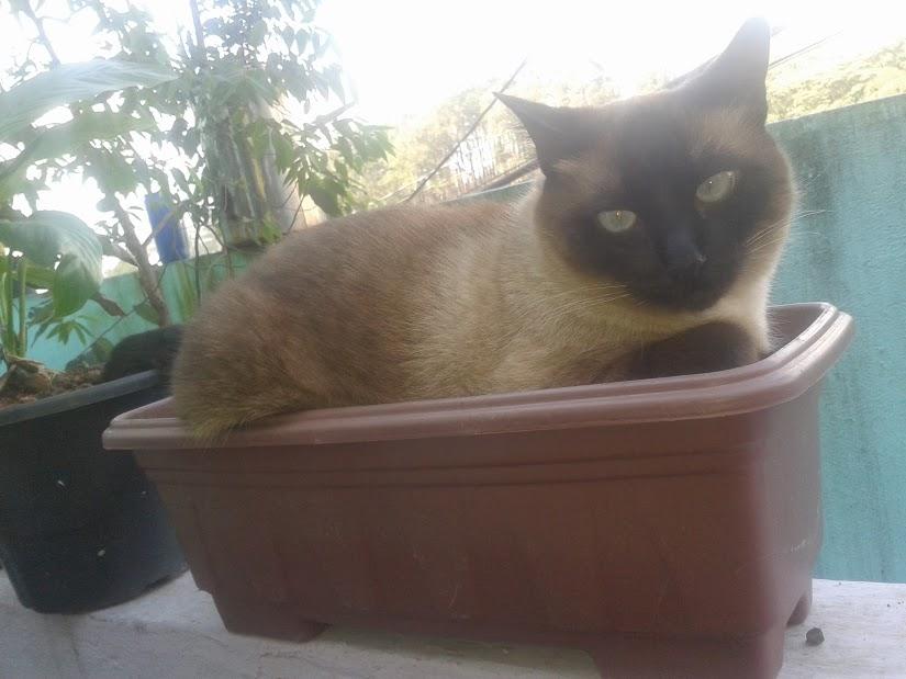 Meu gato Mion
